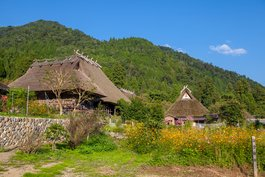 Traditional thatched-roof houses