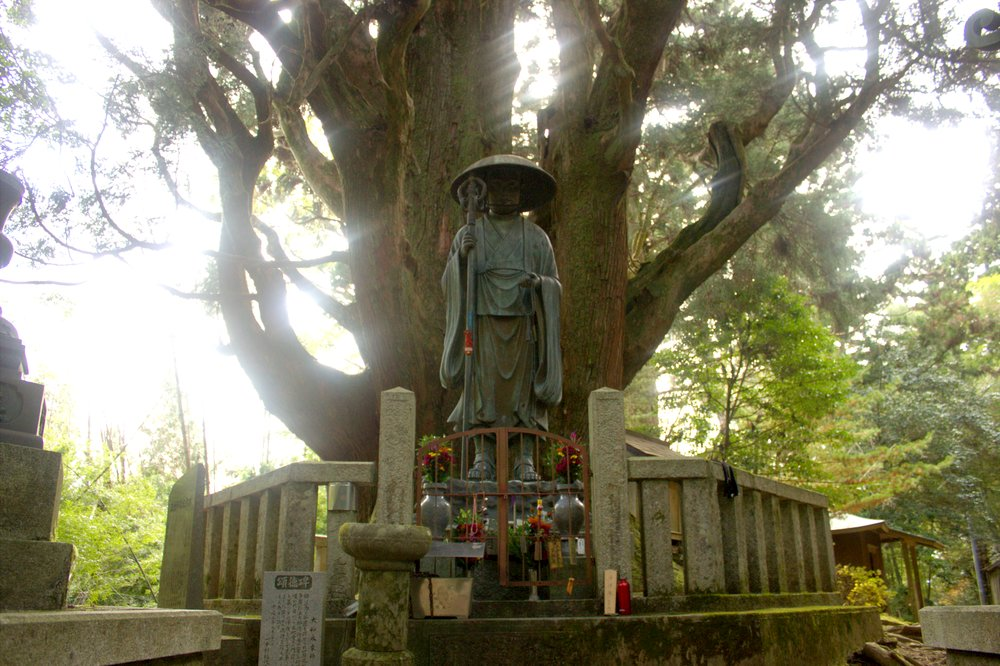 Kobo Daishi statue in front of a large cedar tree